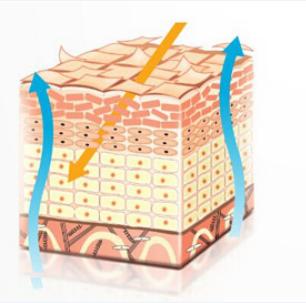 Поврежденный кожный барьер фикция